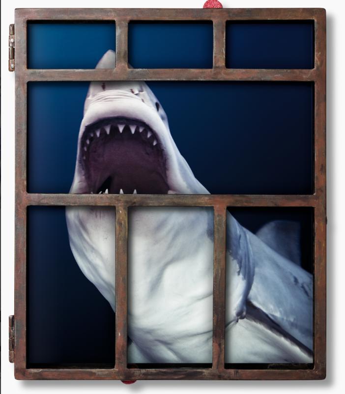 Micher Muller - Sharks
