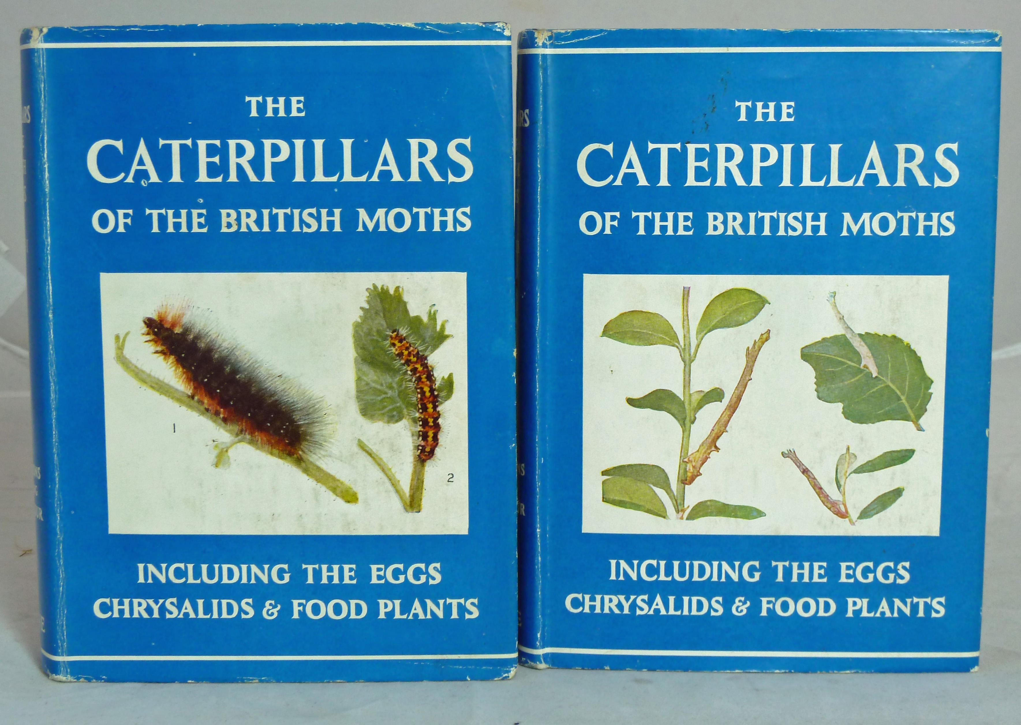 The Wayside And Woodland Series. The Caterpillars Of The British Moths  Series I and II.