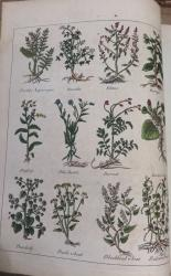 Culpeper's English Physician; and Complete Herbal, To Which Are Now First Added Upwards of One Hundred additional Herbs,