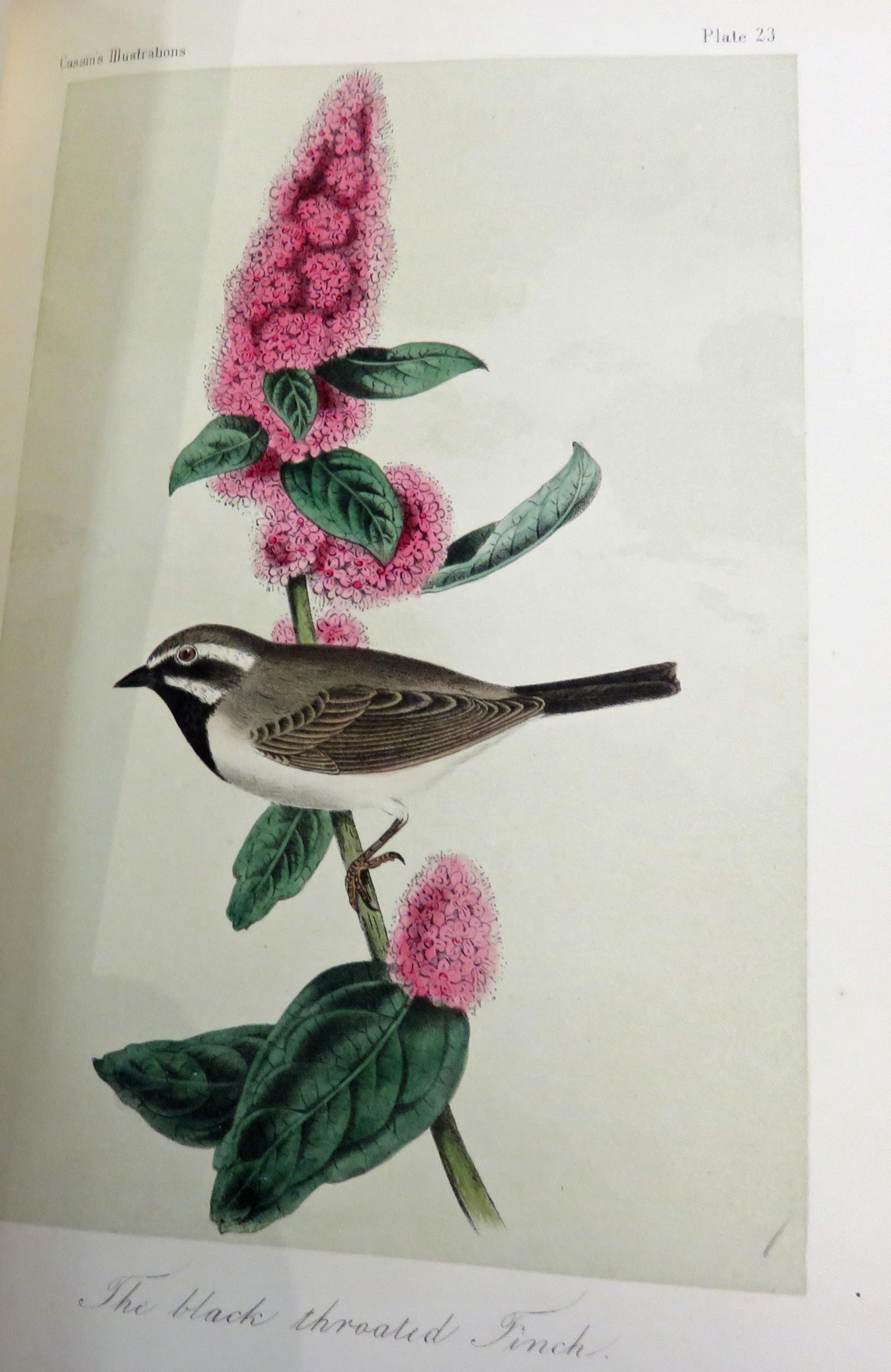Illustrations of the Birds of California, Texas, Oregan, British and Russian American