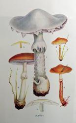 British Fungi and Lichens