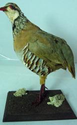 T865 Partridge