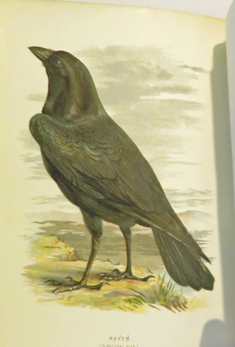 Familiar Wild Birds in four volumes