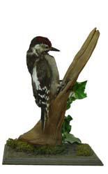 T410 Woodpecker