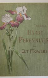 The Best Hardy Perennials For Producing An Abundant Supply of Cut Flowers