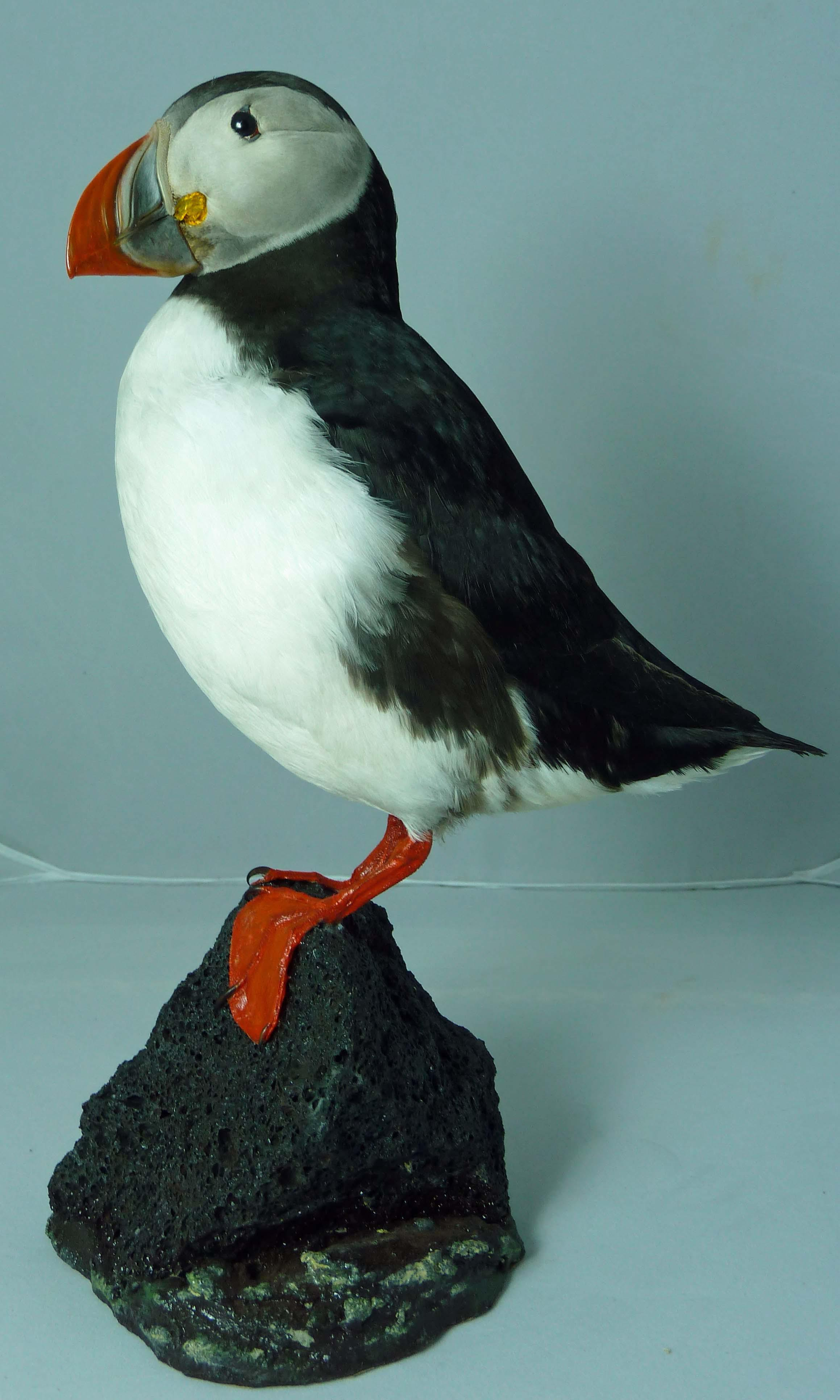 T877 Puffin